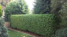 hedge cutting bradford
