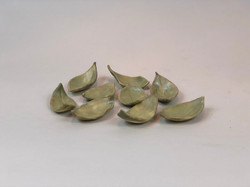 Hashioki Leaves