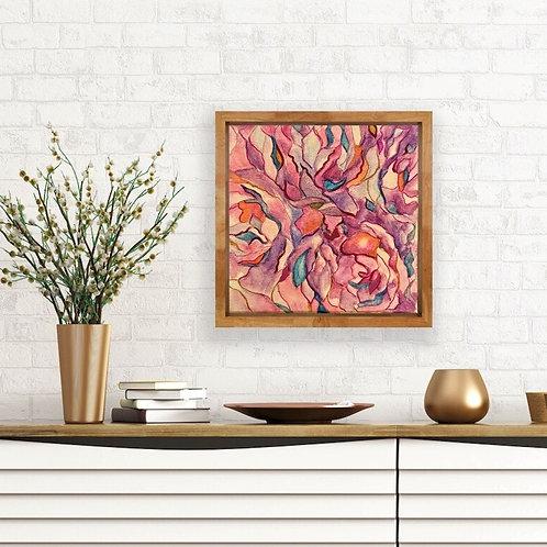 Echeveria in Pinks
