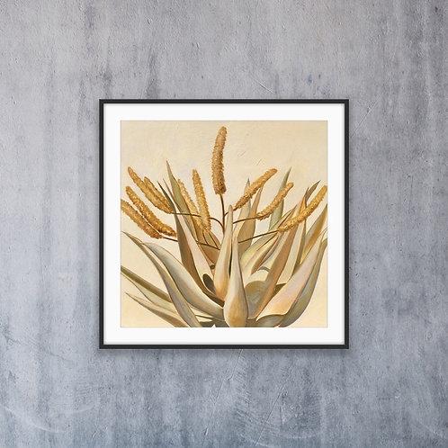 Yellow Aloe