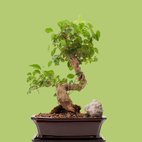 Bonsai Economics: Think Outside the Pot
