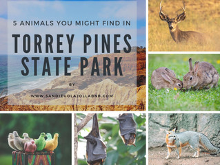 5 Animals You Might Find in Torrey Pines State Park