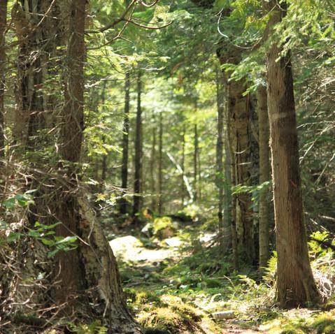 Noisy Bay Trail