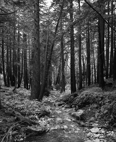 trees stream bw shutterstock_1832808712.