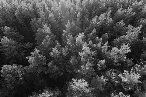 tree from top b_w.jpg