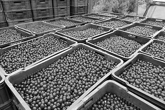 cherry crates bw.jpg
