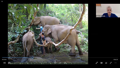 Elephants #1.jpg