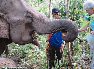 Elephants #5a.jpg