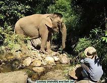 Elephants #4a.jpg