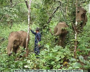 Elephants #2a.jpg