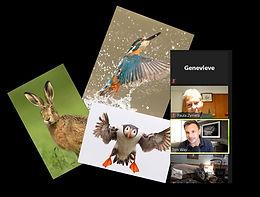 Wildlife photo screenshot.jpg