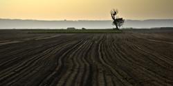 Une terre agricole fertile