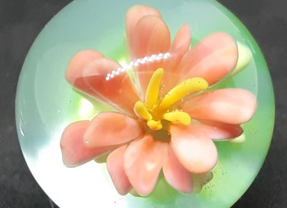 Glass Marble, Pink Rocket Flower by George Pavliscak