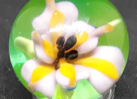 George Pavliscak Glass Marble Iris