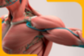 Функциональная анатомия и анализ ОДА.jpg