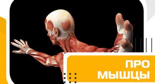 Про мышечную ткань и нюансы, связанные с ней