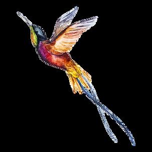 Aquarell-Kolibri