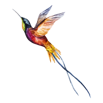 Aquarell-Vogel-2