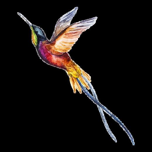 Suluboya Kuş 2