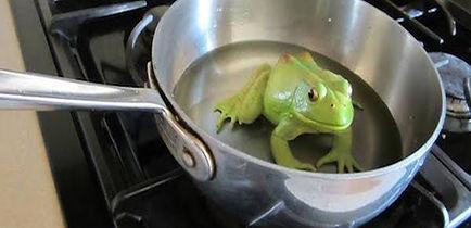 Frog in Pan.jpg