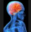 Brain Reinstatement kinesiologie cerveau