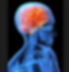 Brain Reinstatement Kinesiologie