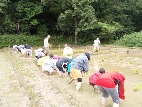 ●6月6日(日)親子わくわく自然学習「田植え」を行いました。