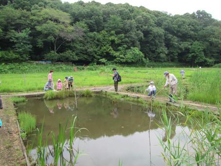 7月4日(日)森あそび「ザリガニとカエル釣り」を予定しています。