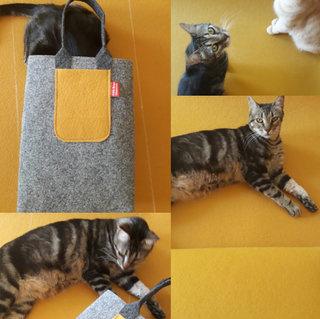 Espinhas the model cat