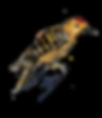 bird 2-01.png