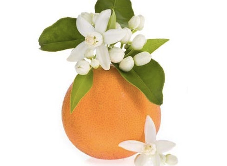 Get to Know Florida's State Flower - The Orange Blossom