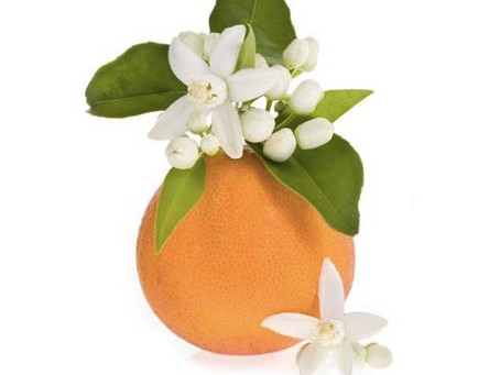 Get to Know Florida's State Flower – The Orange Blossom
