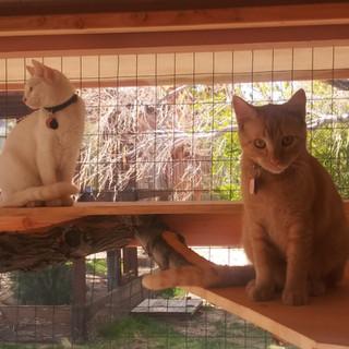 Mila and Opal