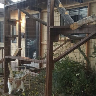 ABQ front yard catio