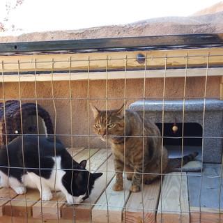 Rosie & Thumbi in the pethouse