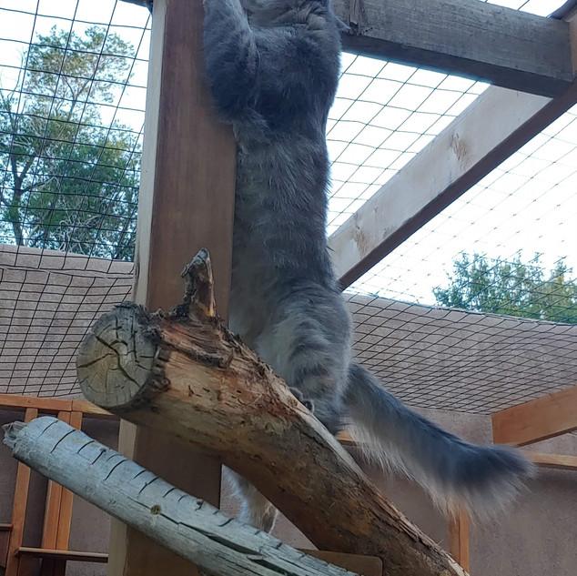 Climbing tower/scratching post