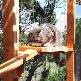 Snacking in the catio