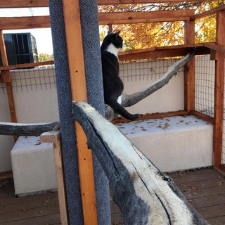 ABQ 2nd story catio