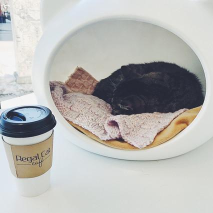 Visiting The Regal Cat Café In Calgary, Alberta
