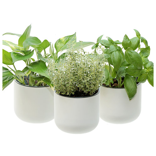 Eden Suction Planter - Set of 3