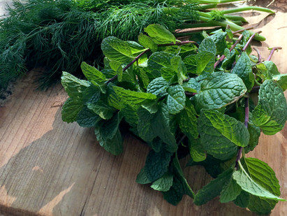 Top 5 herbs to grow indoors