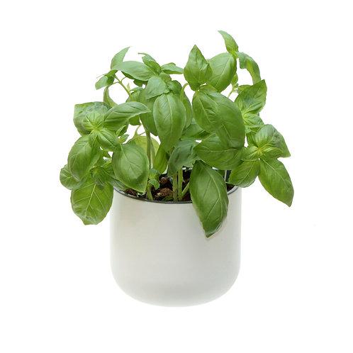Eden Suction Planter  - Set of 1