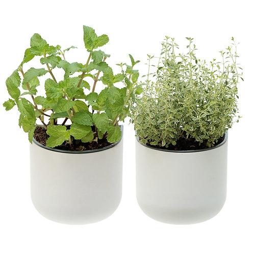 Eden Suction Planter - Set of 2
