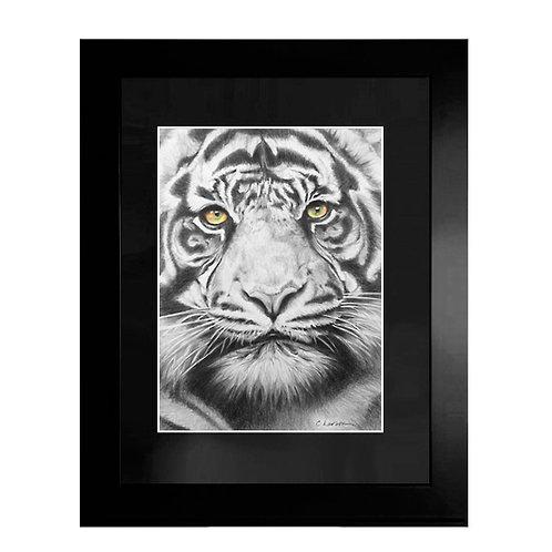 'Panthera Tigris' Original Pencil Drawing