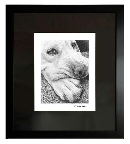 Labrador art, labrador retriever drawing, dog drawing, retriever drawing