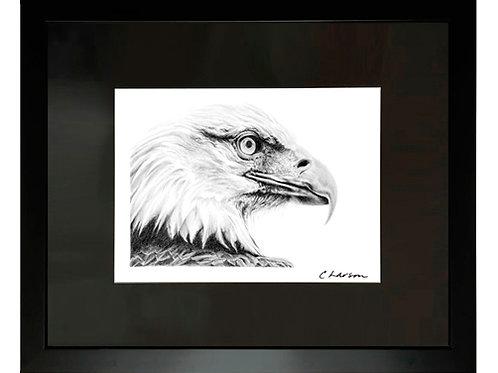bald eagle art, eagle drawing, raptor drawing, bird art, american art, patriotic art, patriotic drawing, americas symbol