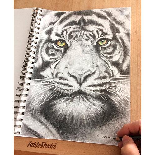 tiger drawing, tiger art, tige pencil drawing, siberian tiger art, Wild art