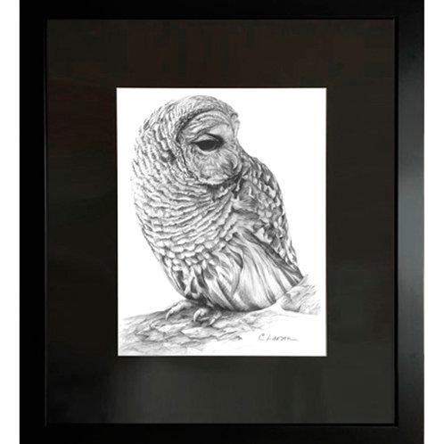 'Barred Owl' Framed Original Drawing (pencil)