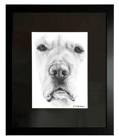 Labrador Retriever art, Original pencil art and prints, Labrador portrait, Retriever pencil original, labrador retriever pencil art