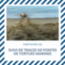 Copie de Flyer animation iguane(1).png